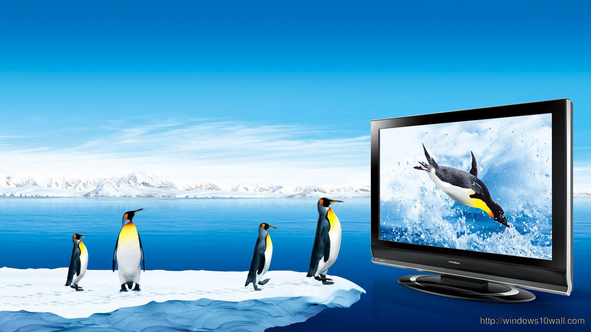 funny-penguins-watch-tv-wallpaper
