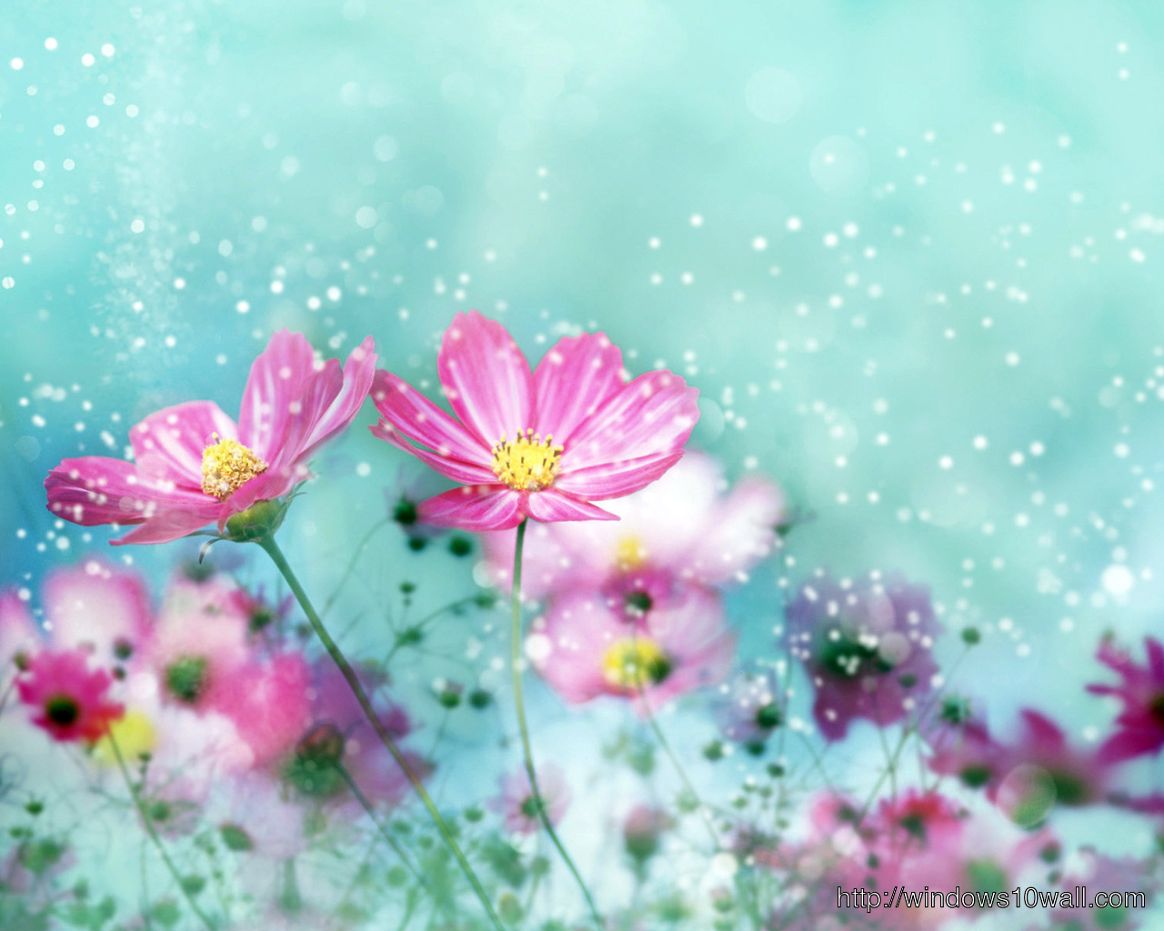 HD colorful flower wallpapers