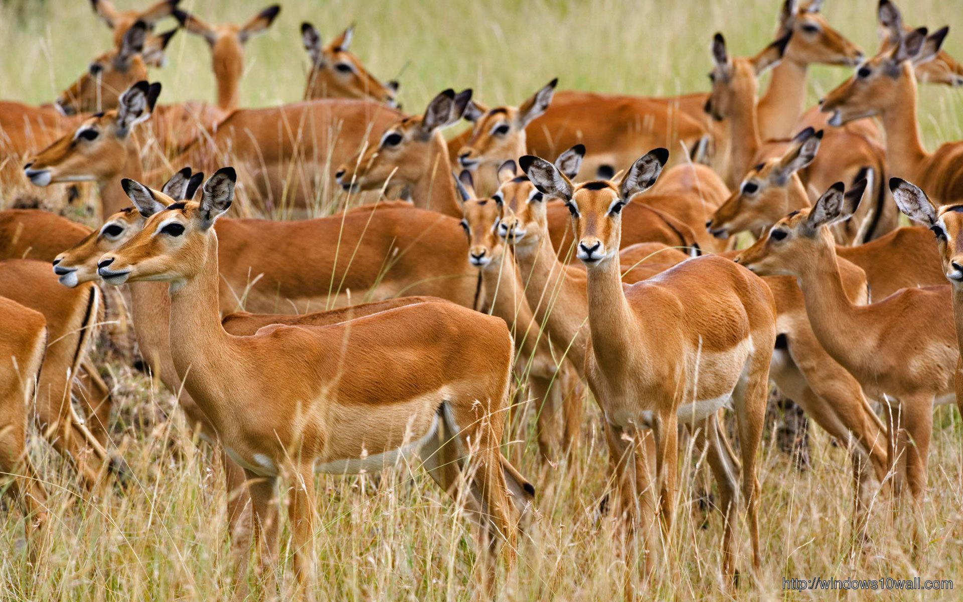 herd-of-deer-animal-wallpaper