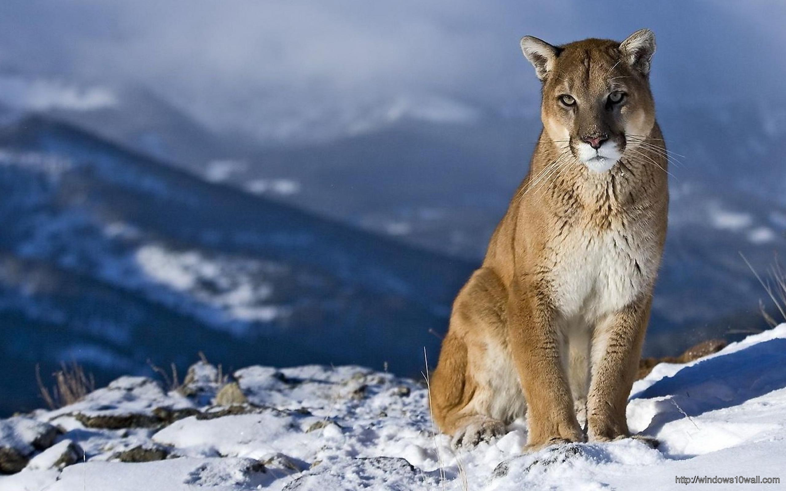 Mountain Lion Background Wallpaper Windows 10 Wallpapers