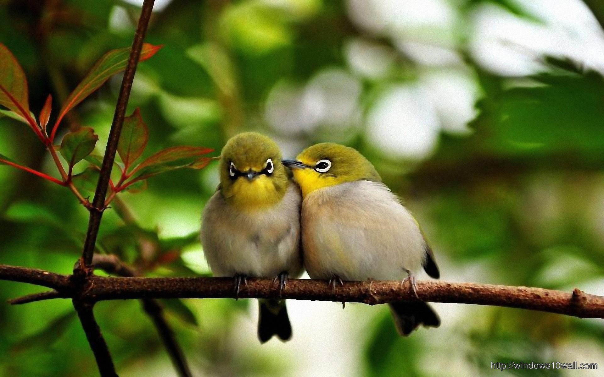 Nature Photo Birds