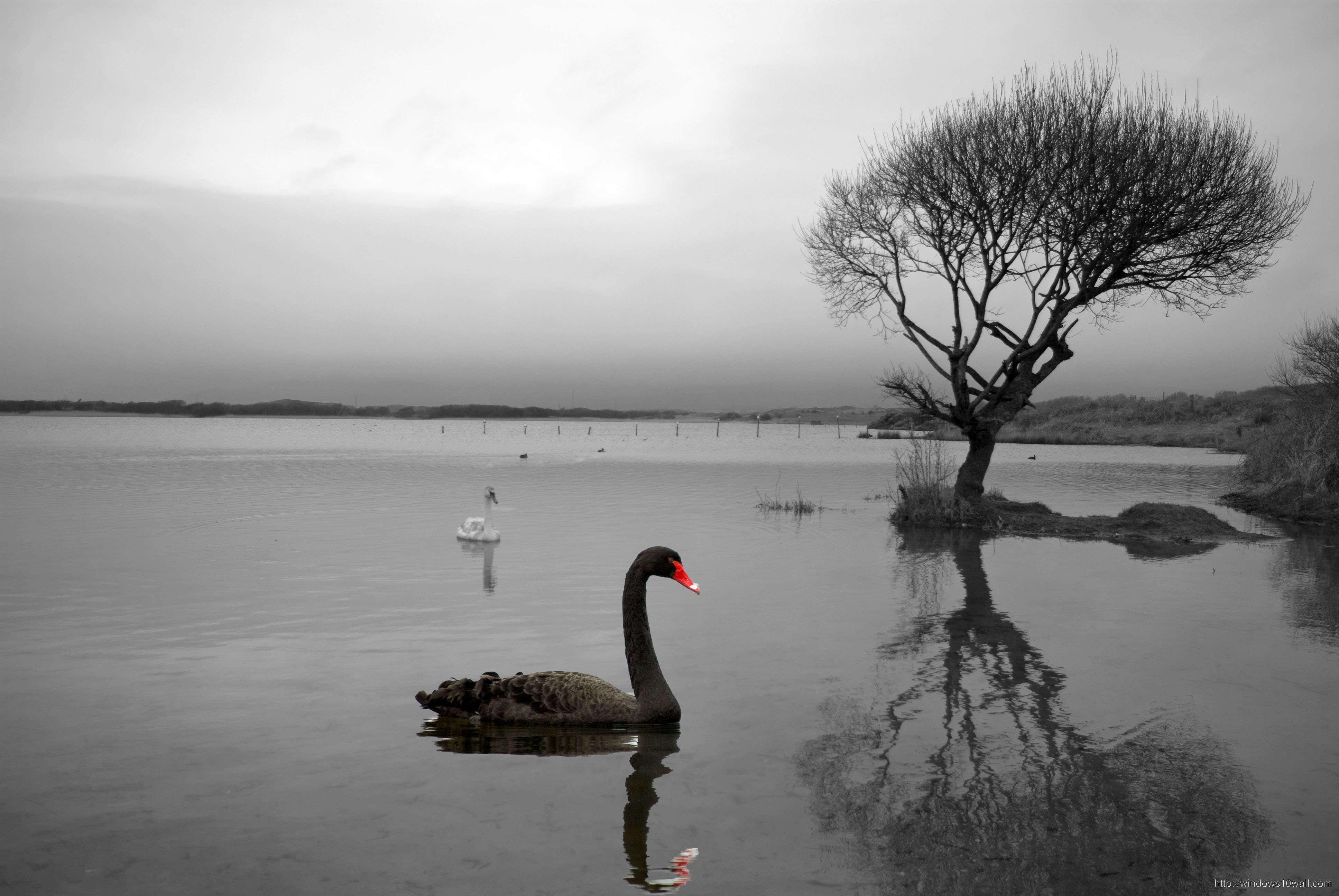 Nature Photography Art Black And White - windows 10 Wallpapers