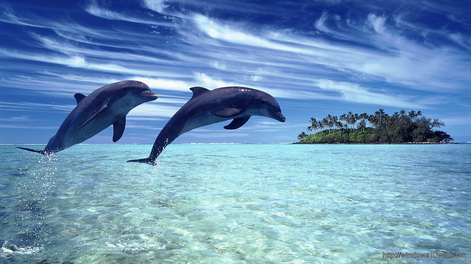 nature-scenes-with-dolphin