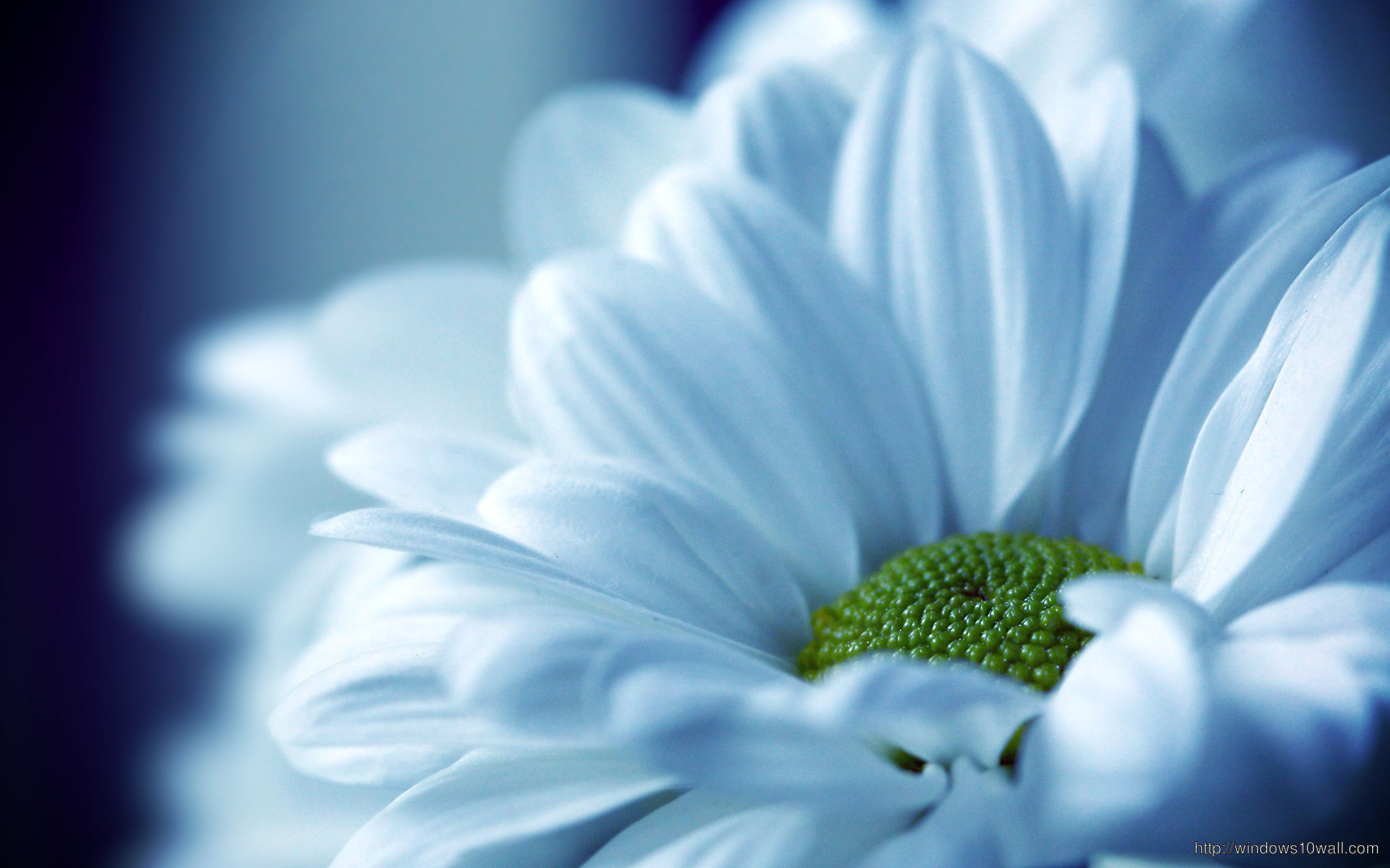Flowers windows 10 wallpapers for 3d white flower wallpaper