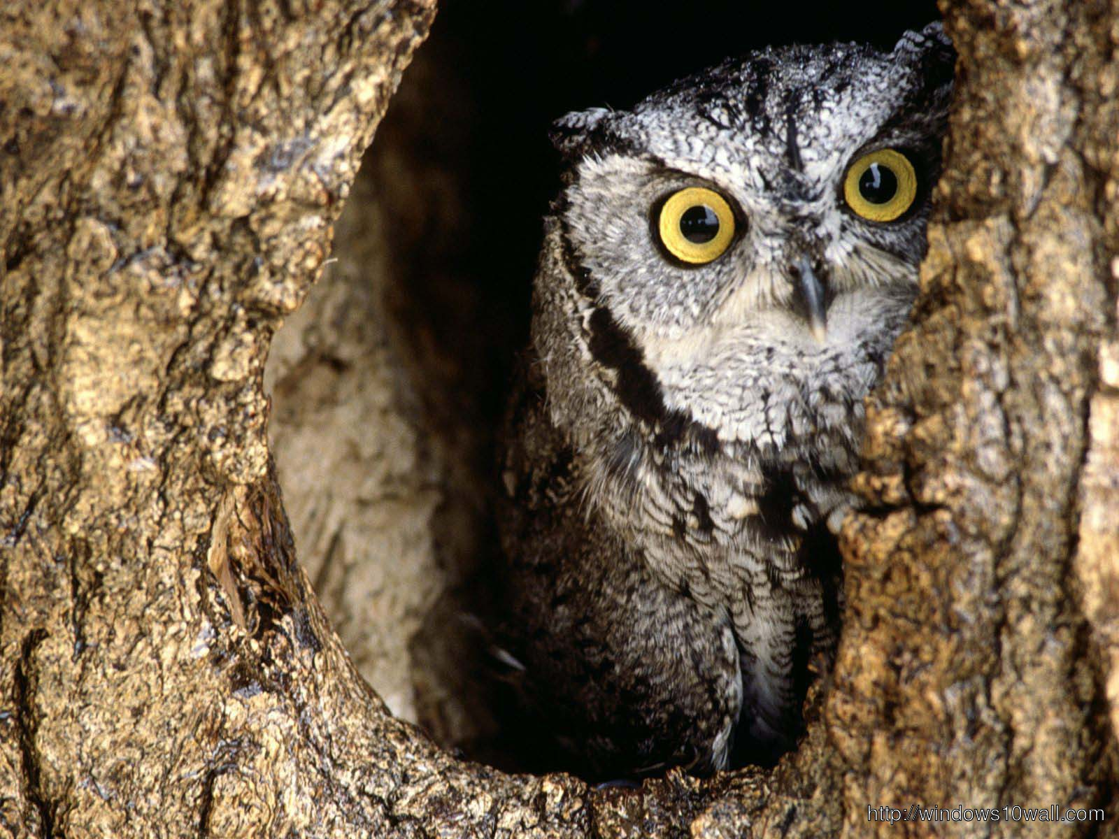 Owl Best Wallpaper