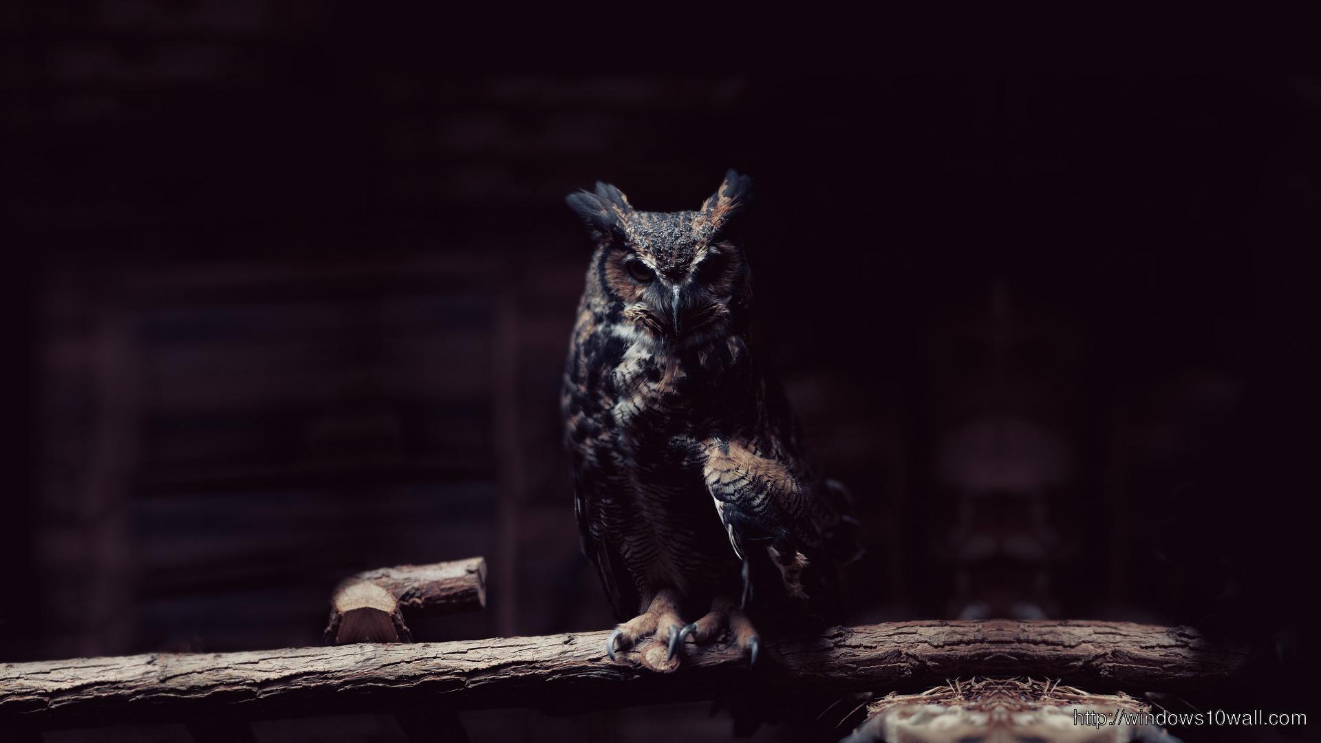 Owl Nice Wallpaper
