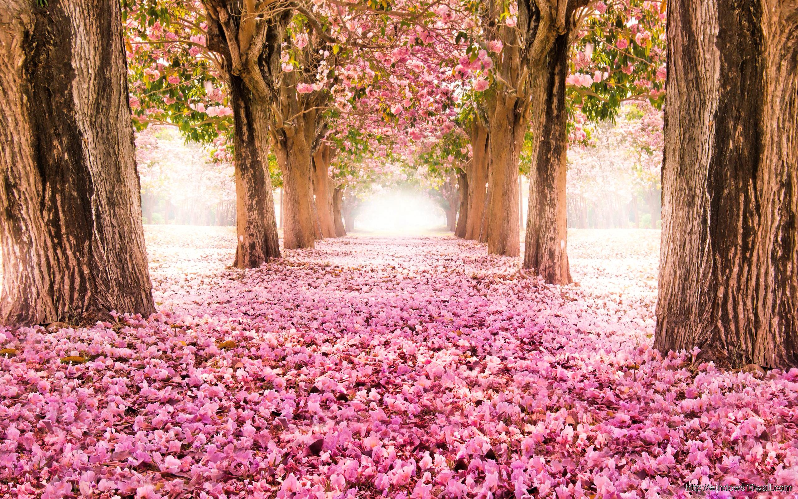 pink-flower-land-wallpaper