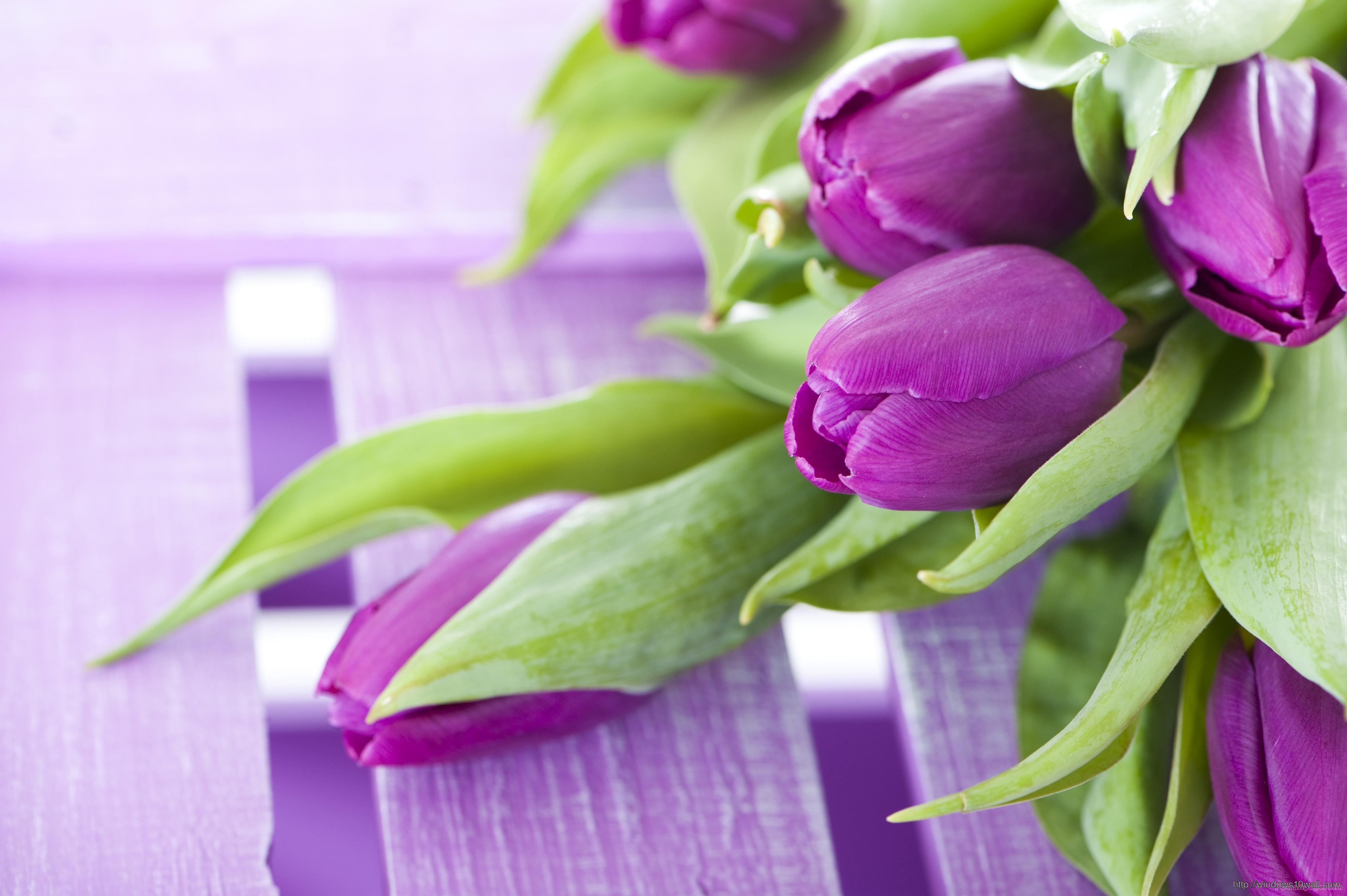 фиолетовые цветы в коробке  № 2541485 без смс