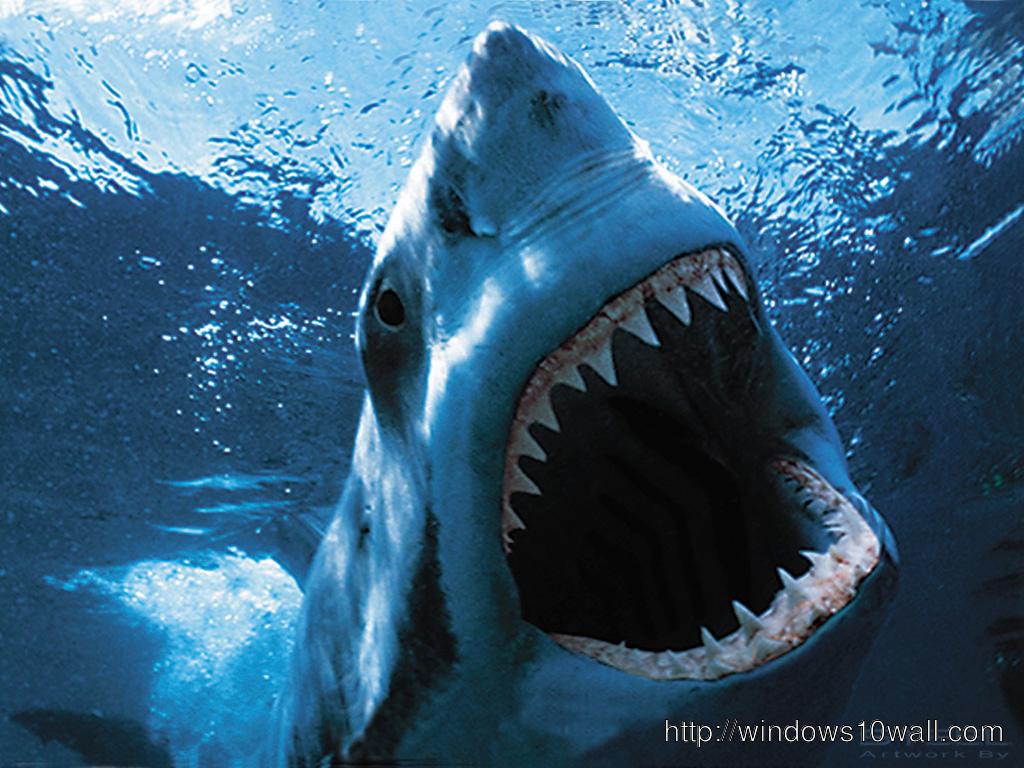 Shark Wallpaper Desktop