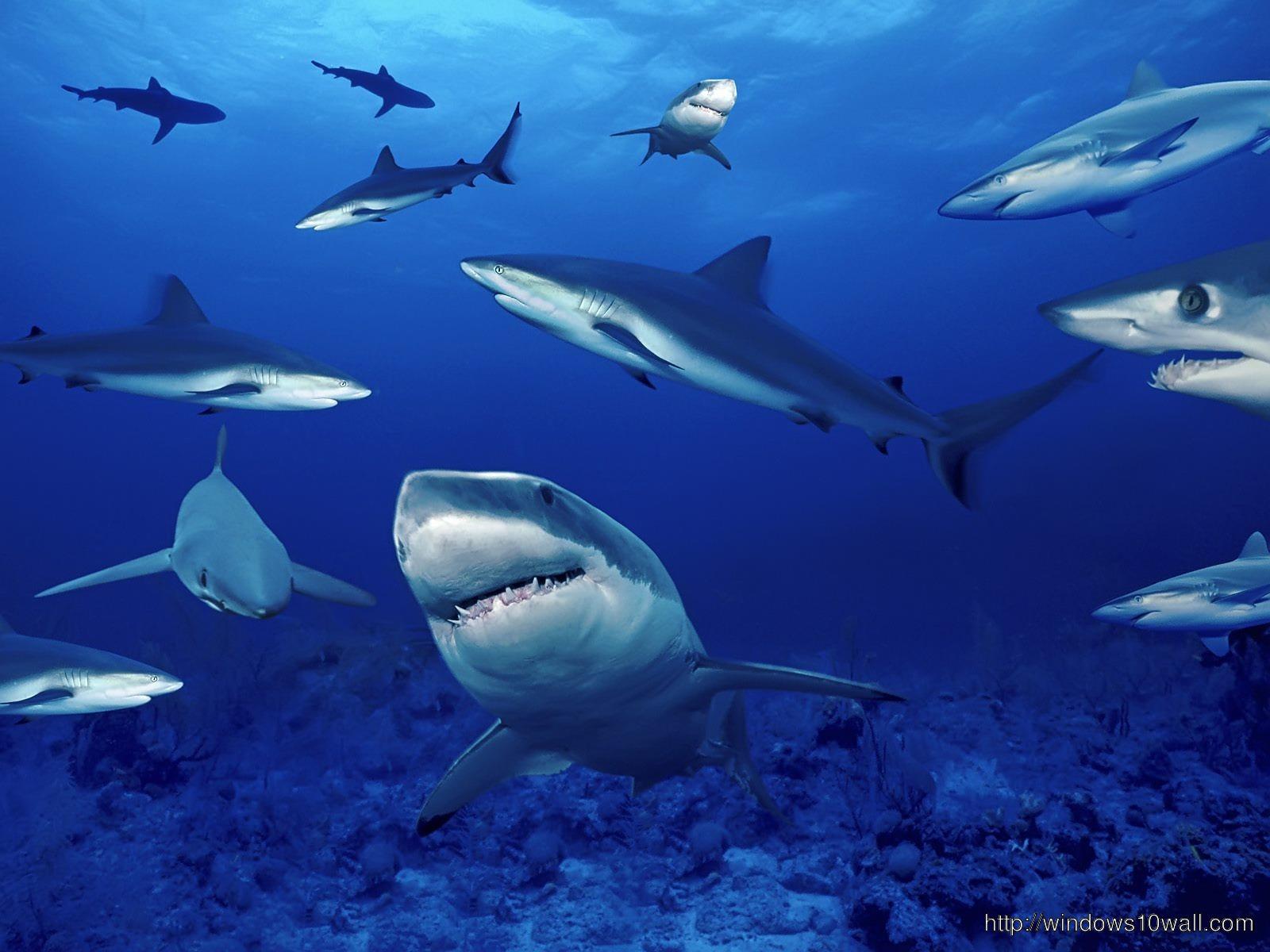 Shark Wallpaper Download