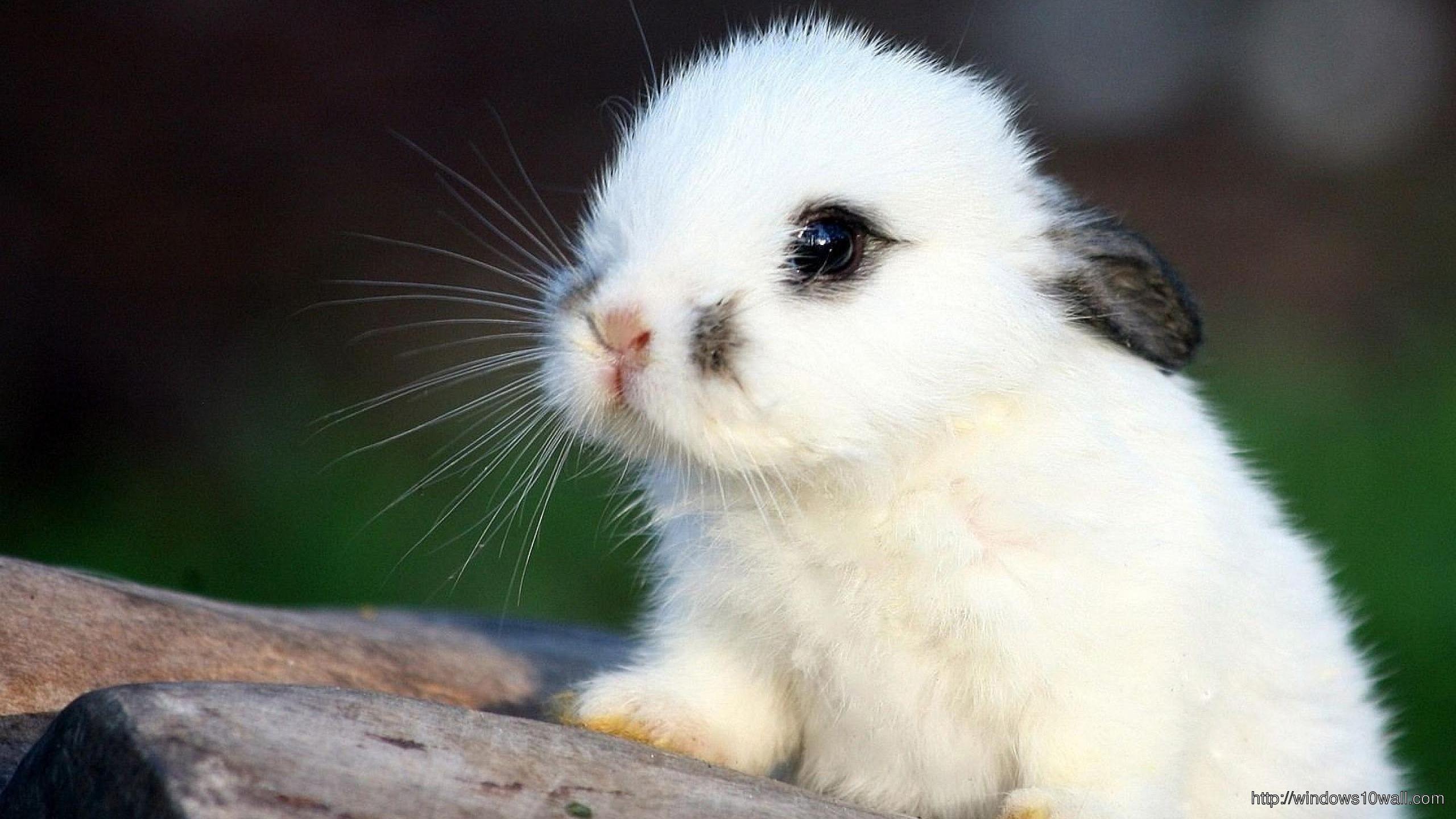 White Bunny Cute Wallpaper