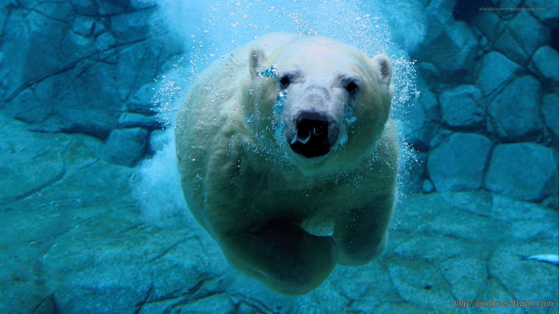 white bear in water background wallpaper hd 1080p