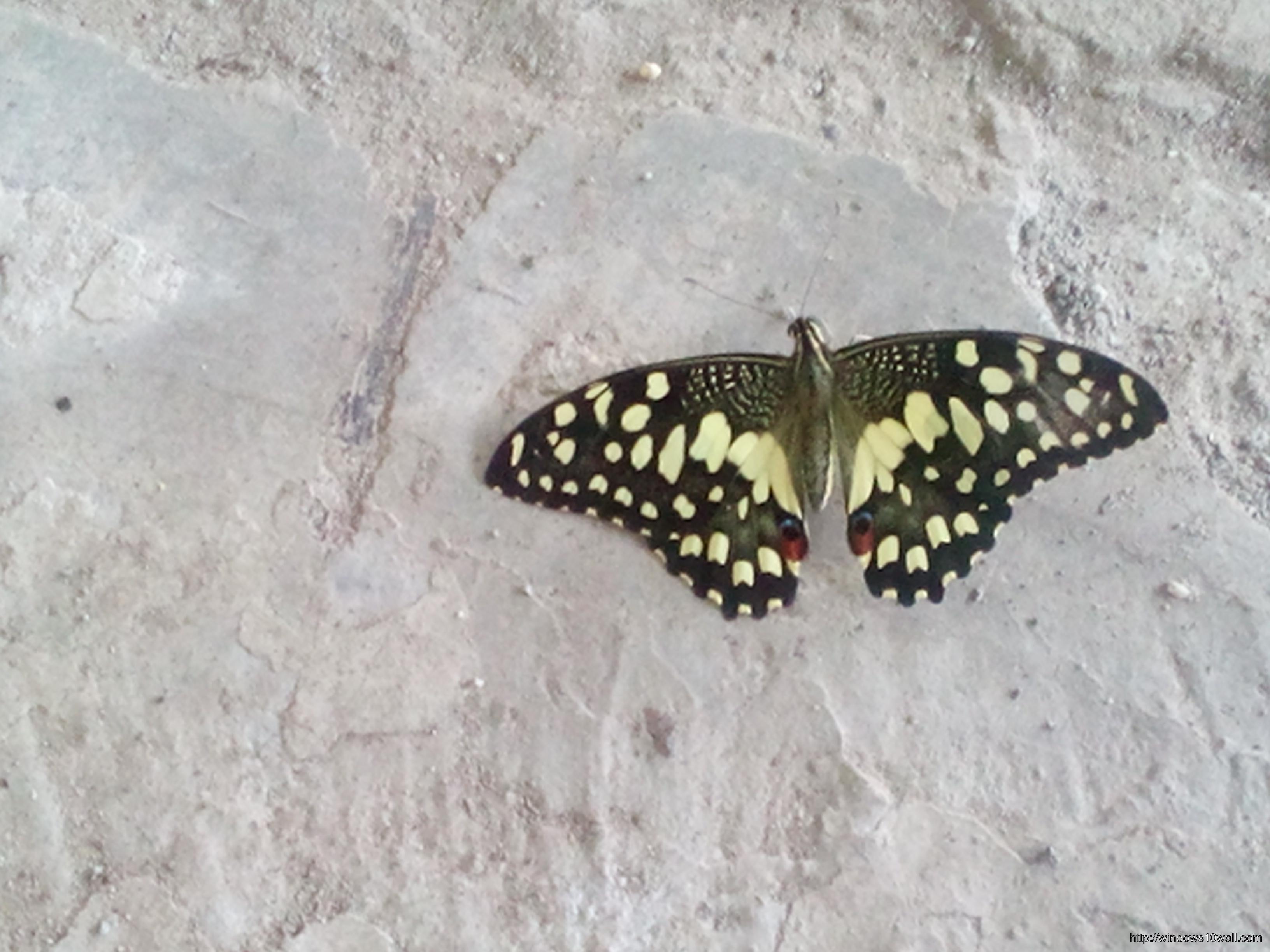 Beautiful Butterfly Eyes