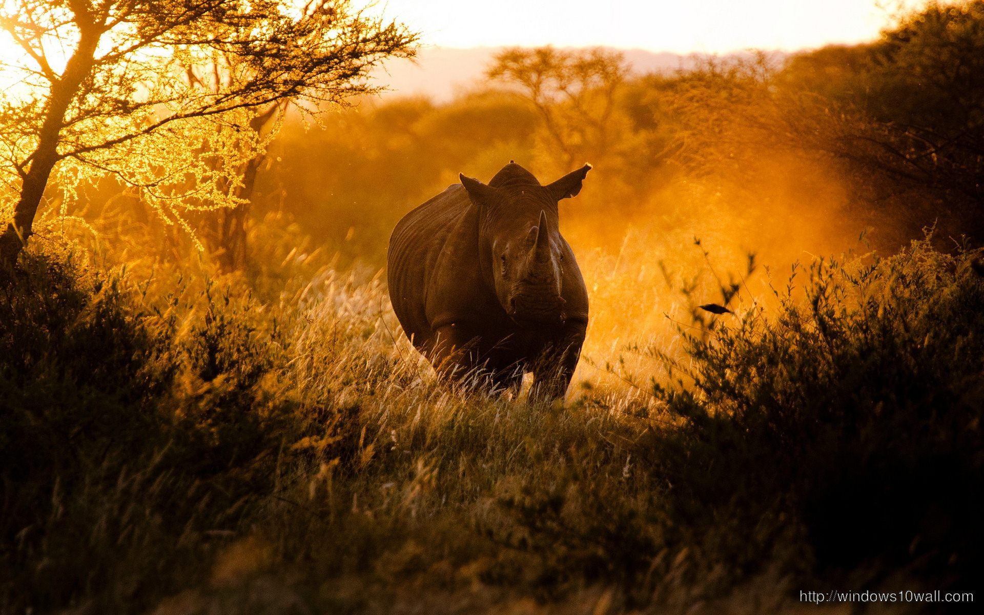 African Rhino Background Wallpaper Windows 10 Wallpapers