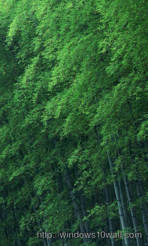 Background Wallpaper 240x320 rainforest