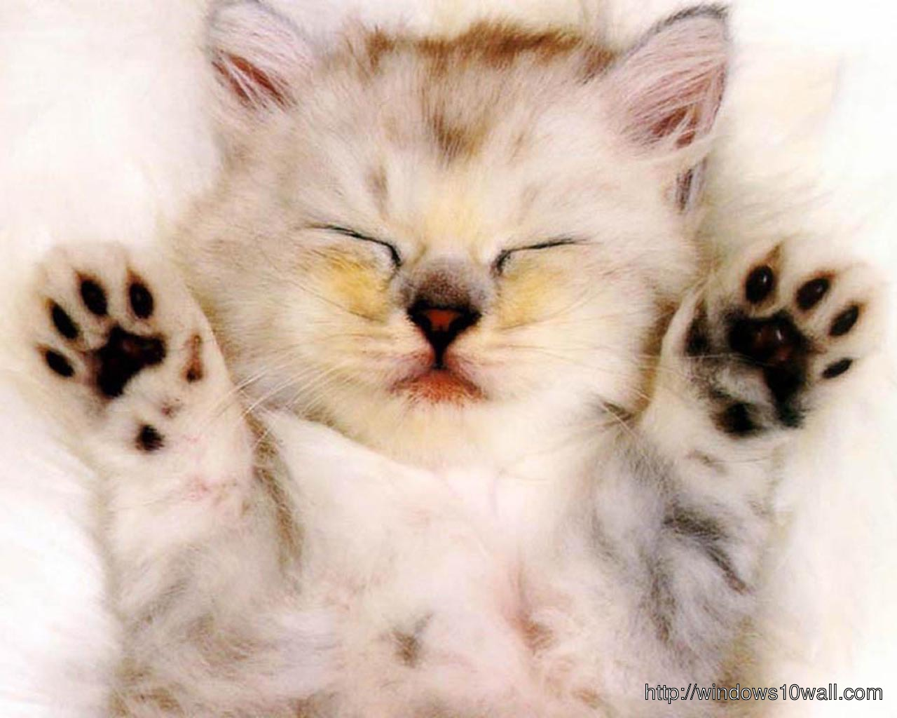Cat Sleeping Funny Wallpaper