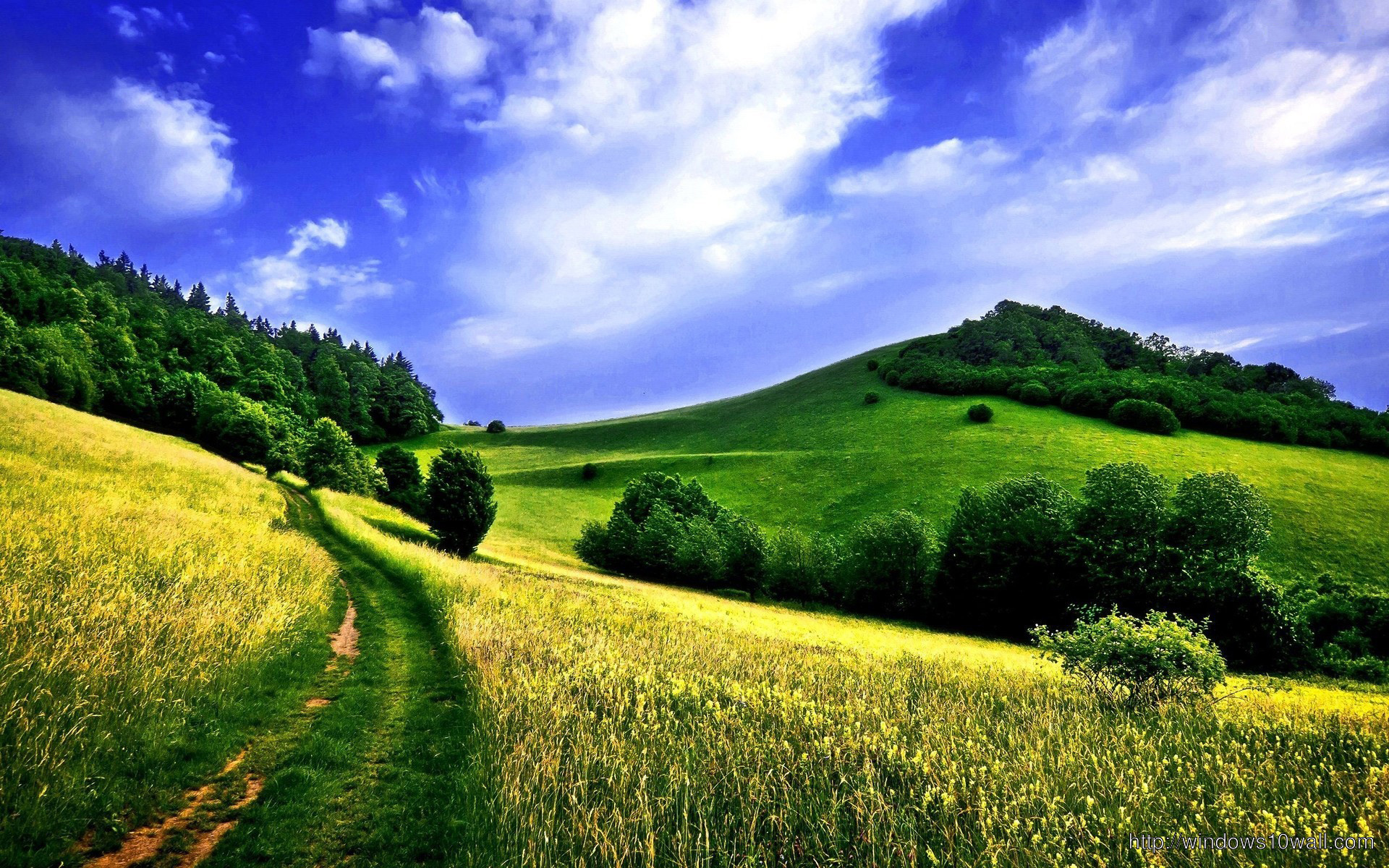 Country Road In A Green Field Wallpaper Windows 10