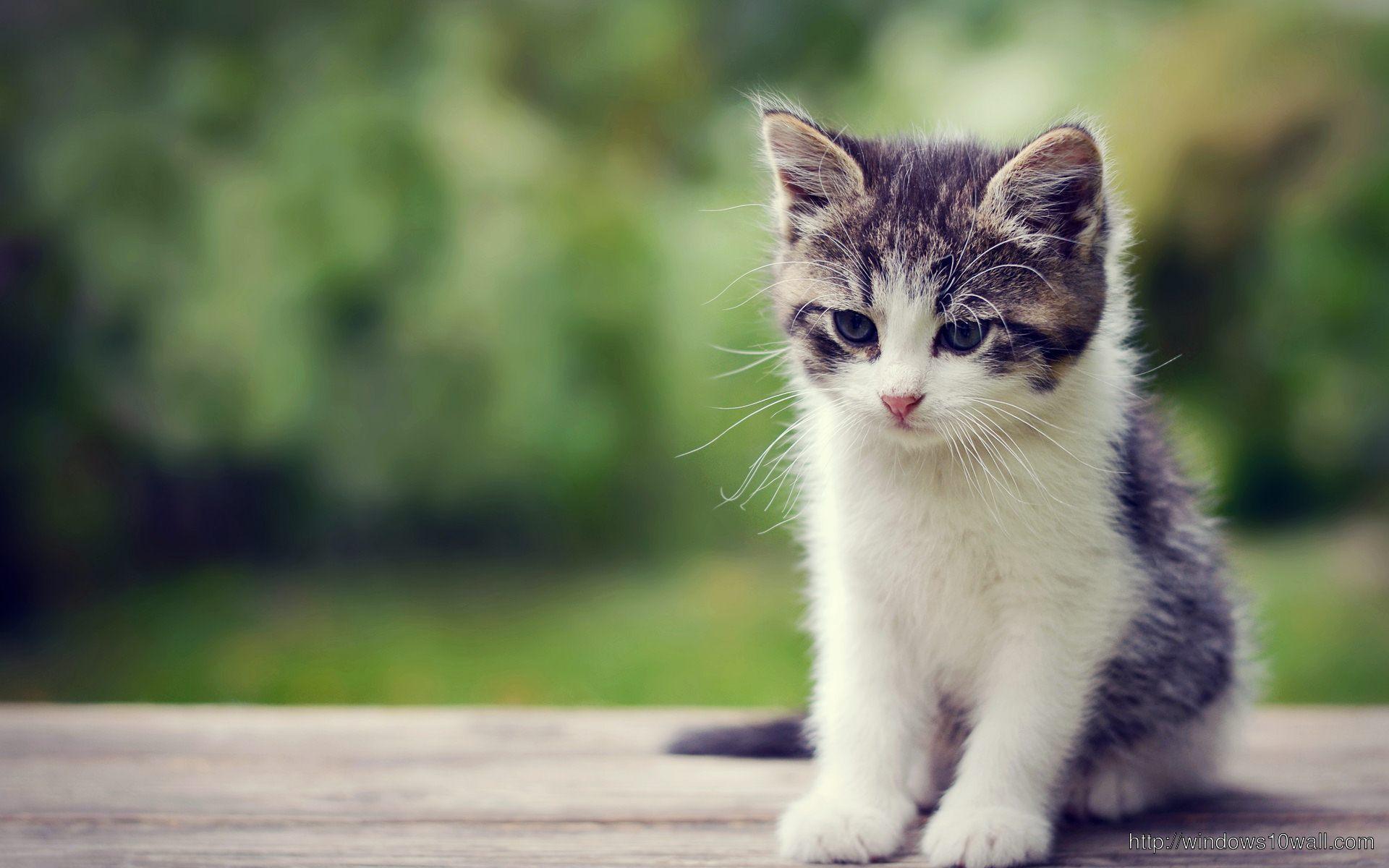cute-little-kitten-background-wallpaper