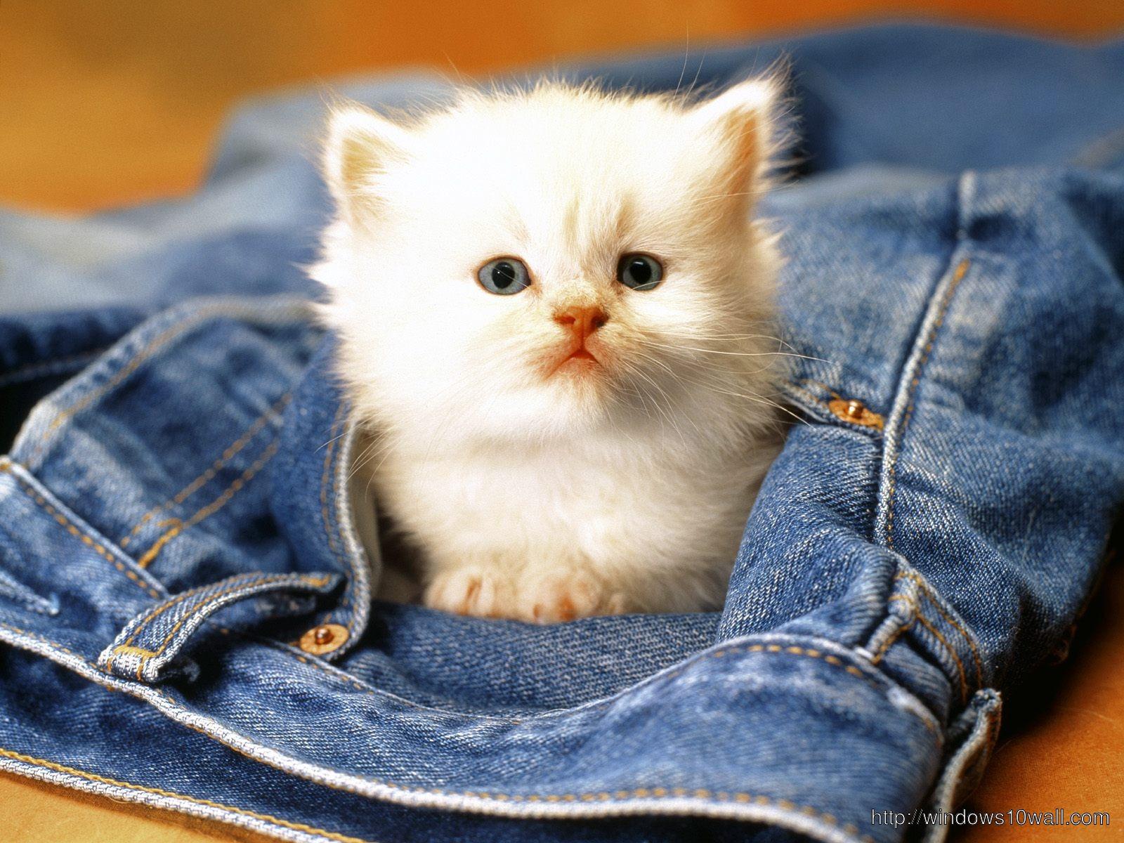 cute cat inside Jeans wallpaper