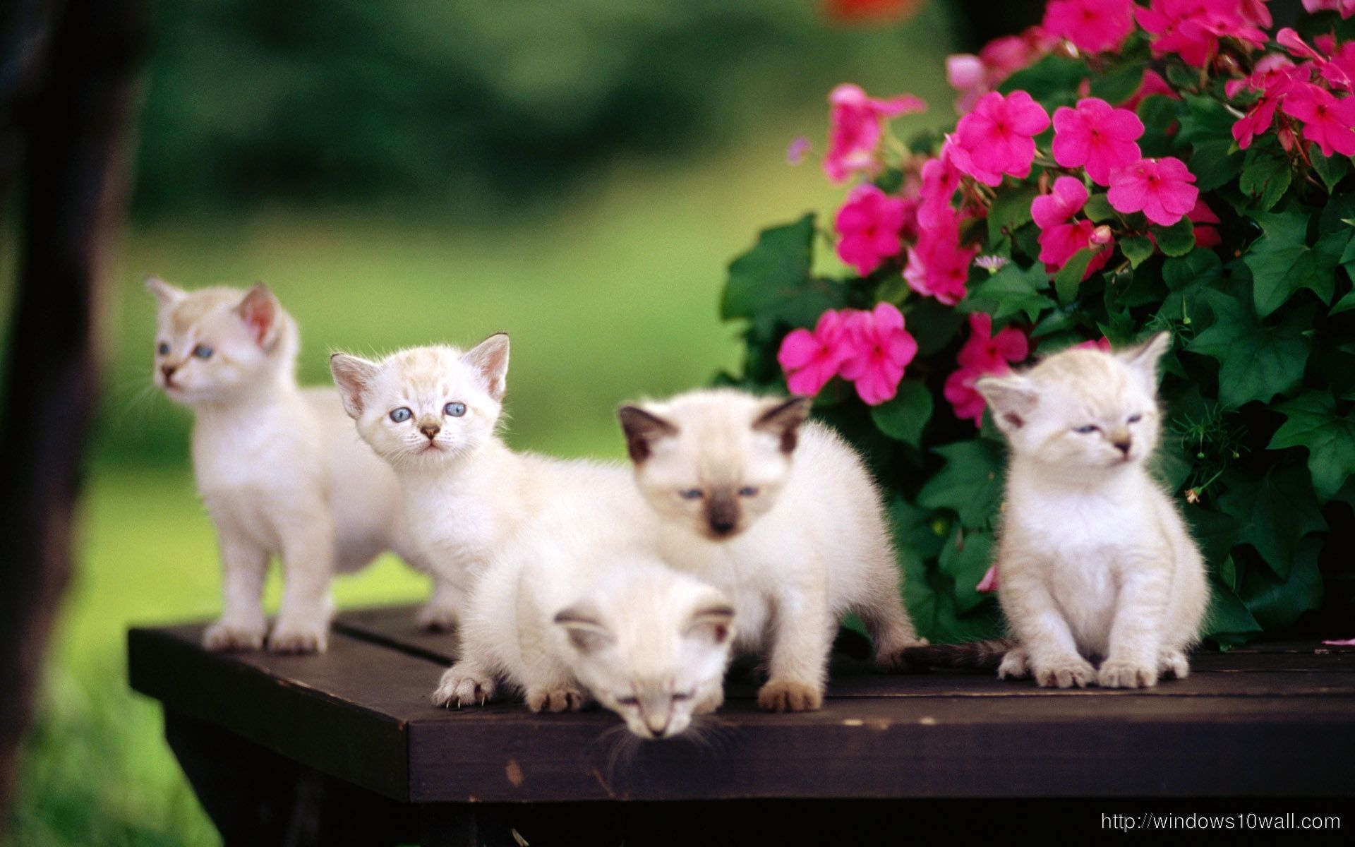 Cute Little Kittens Wallpapers