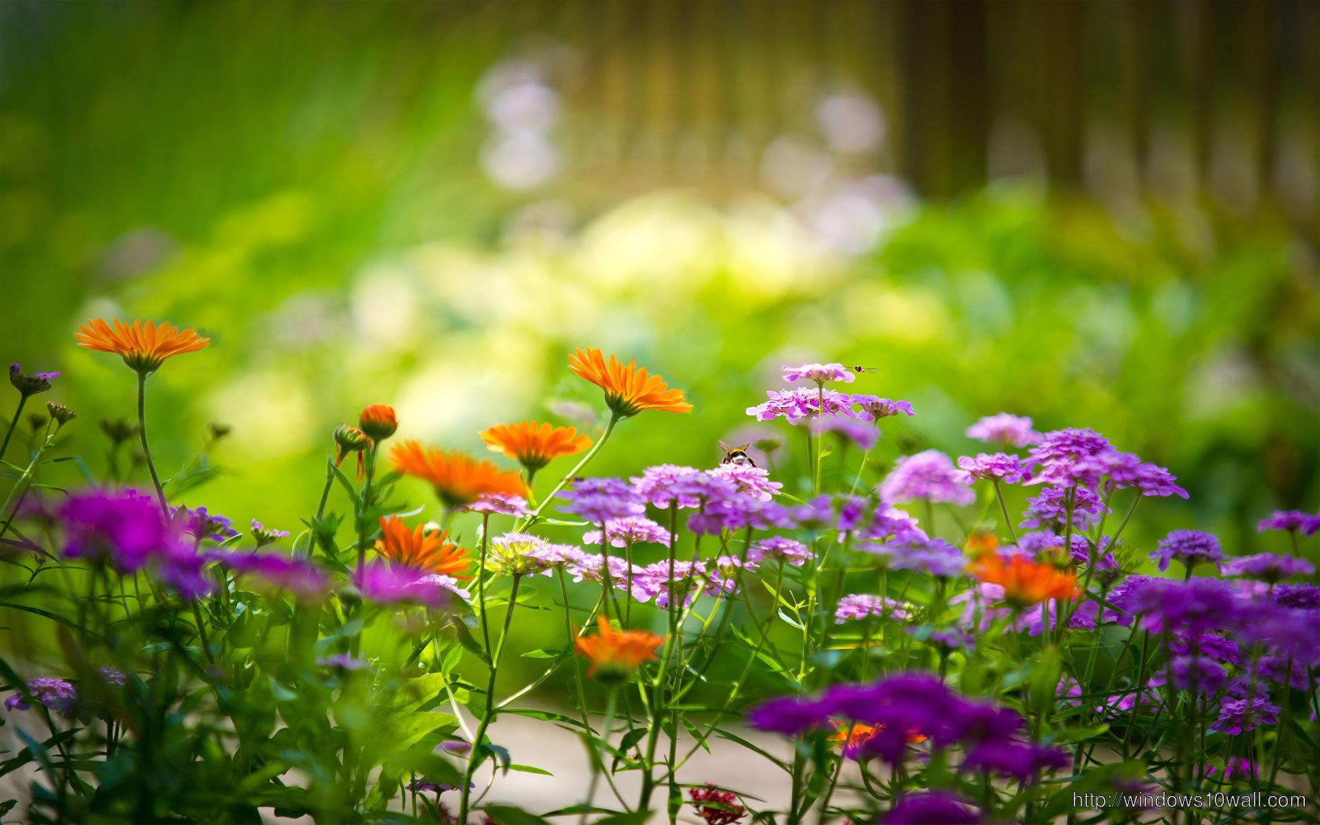 Flower Background Wallpaper Free Download