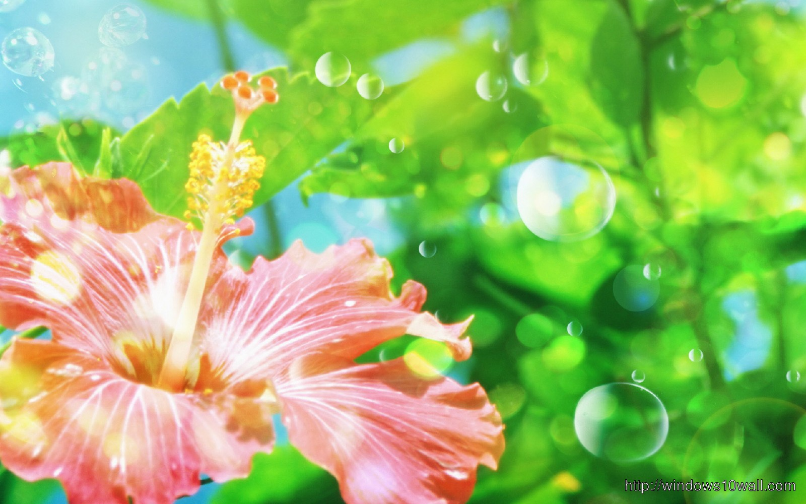 Flower Background Wallpaper To Download