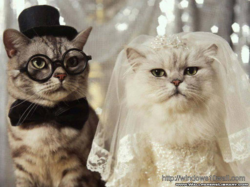 Funny Cat Wedding Wallpaper