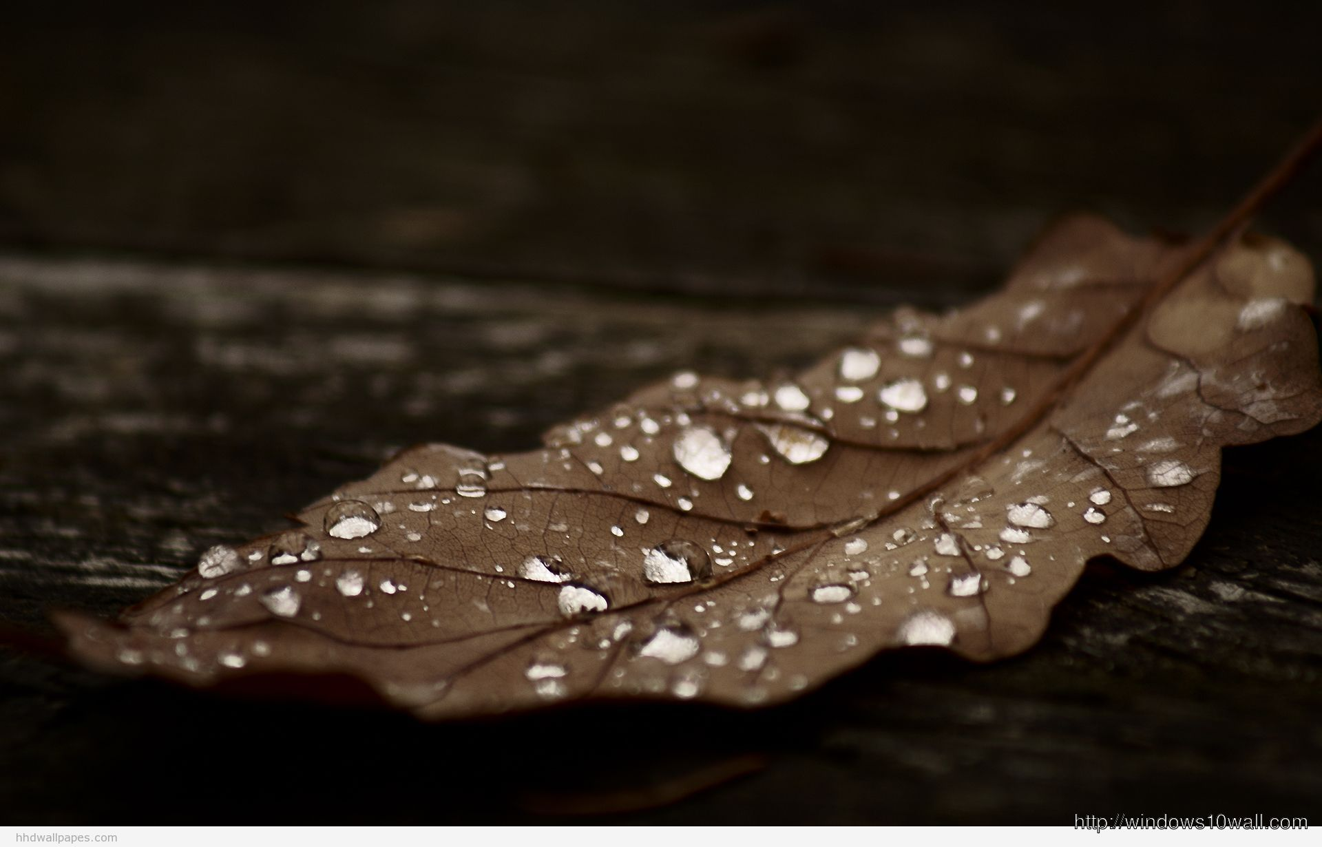 Macro Leaf Photography Background Wallpaper