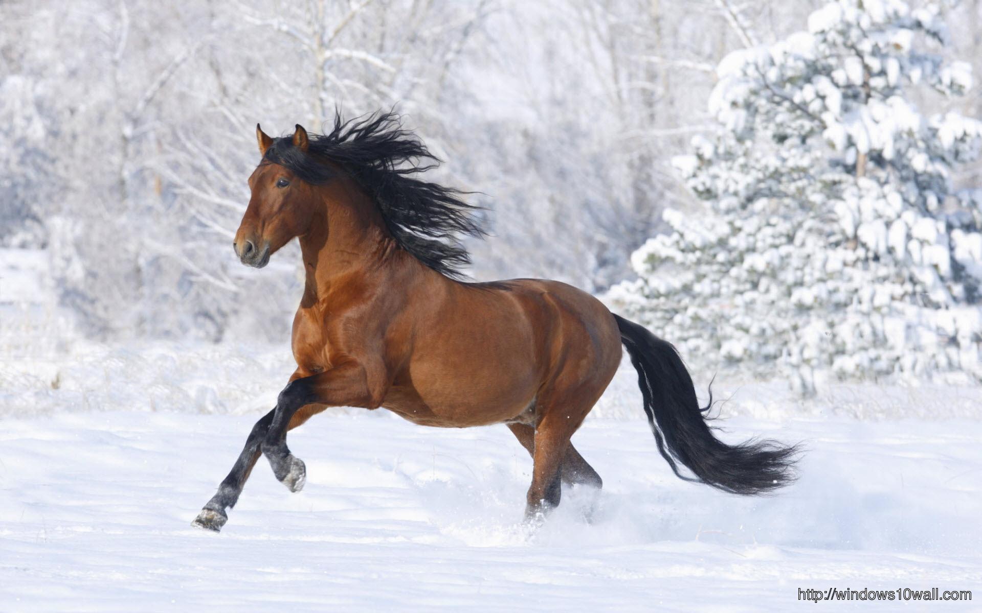 racing-horse-wallpaper