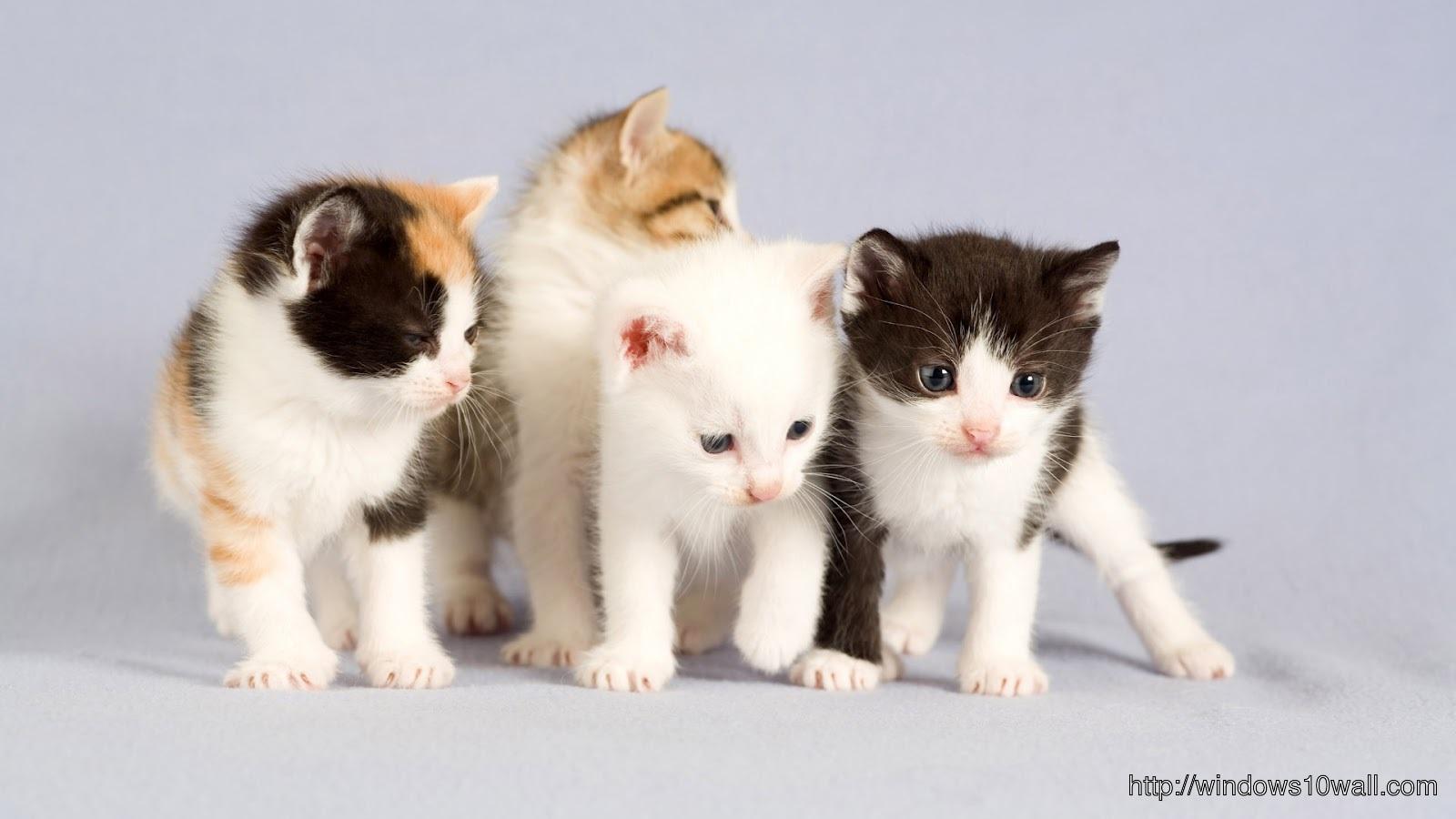 small cute cats photo