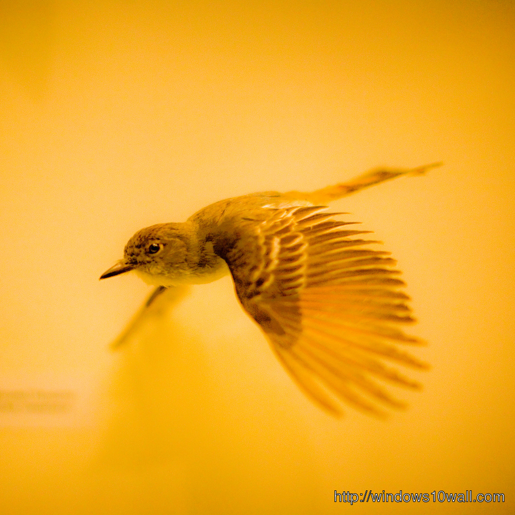 Bird iPad Background Wallpaper