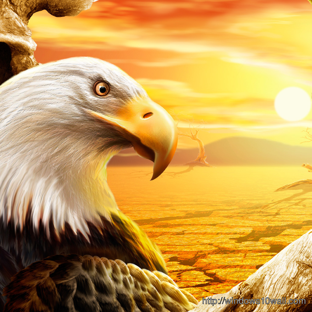 eagle close up iPad Background Wallpaper