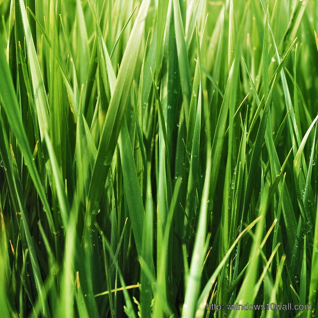 Green Grass iPad Background Wallpaper