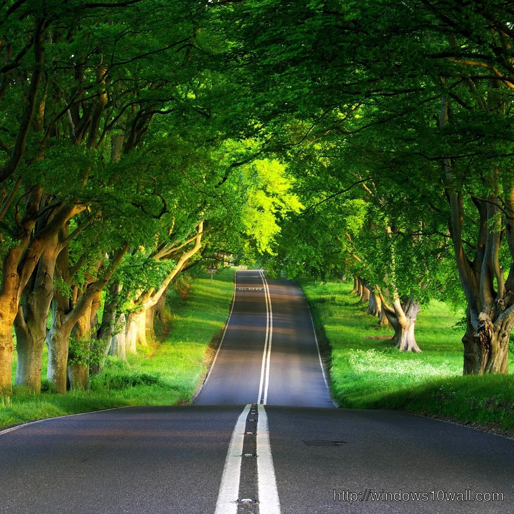 Green Road iPad Background Wallpaper