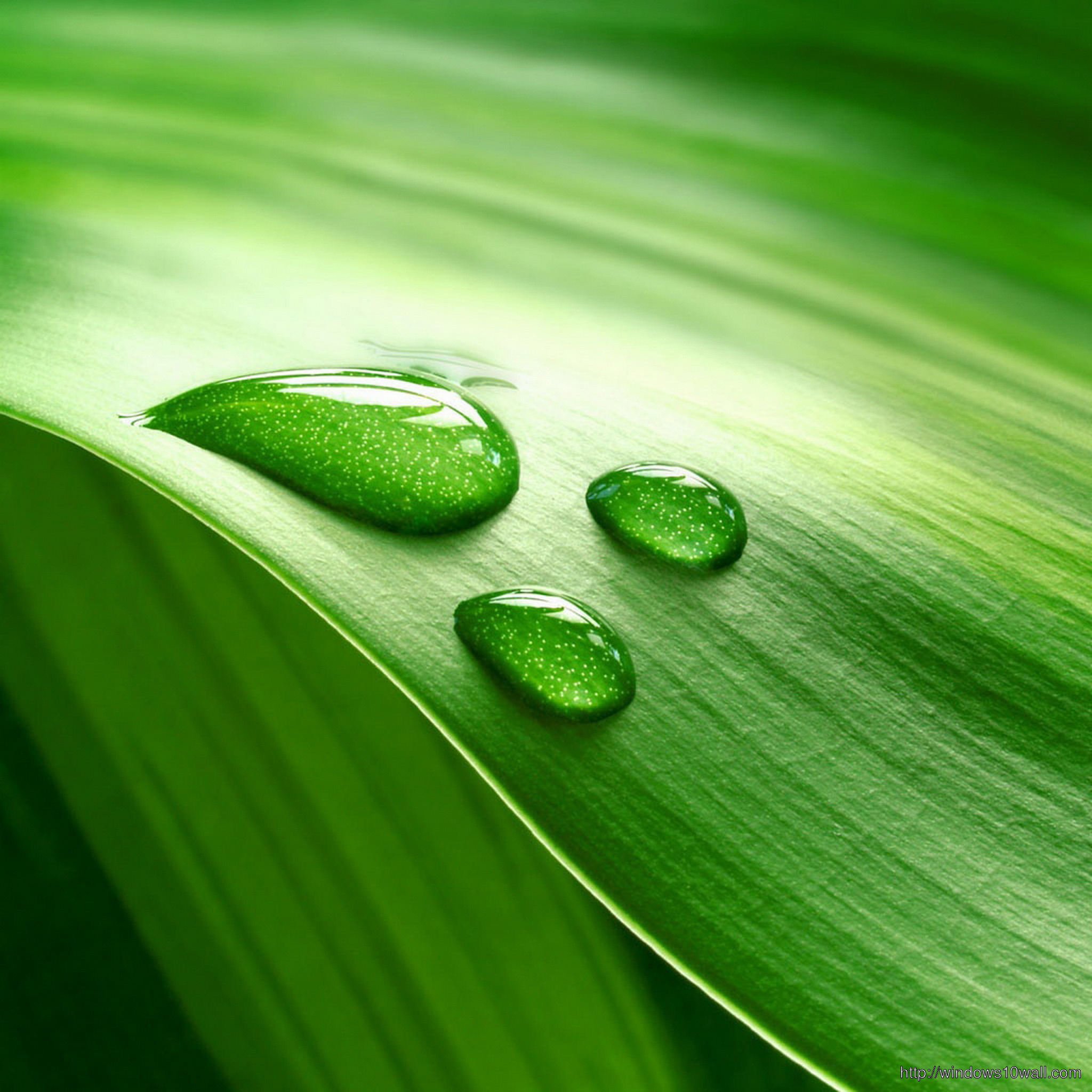 leaves with water drops ipad background wallpaper