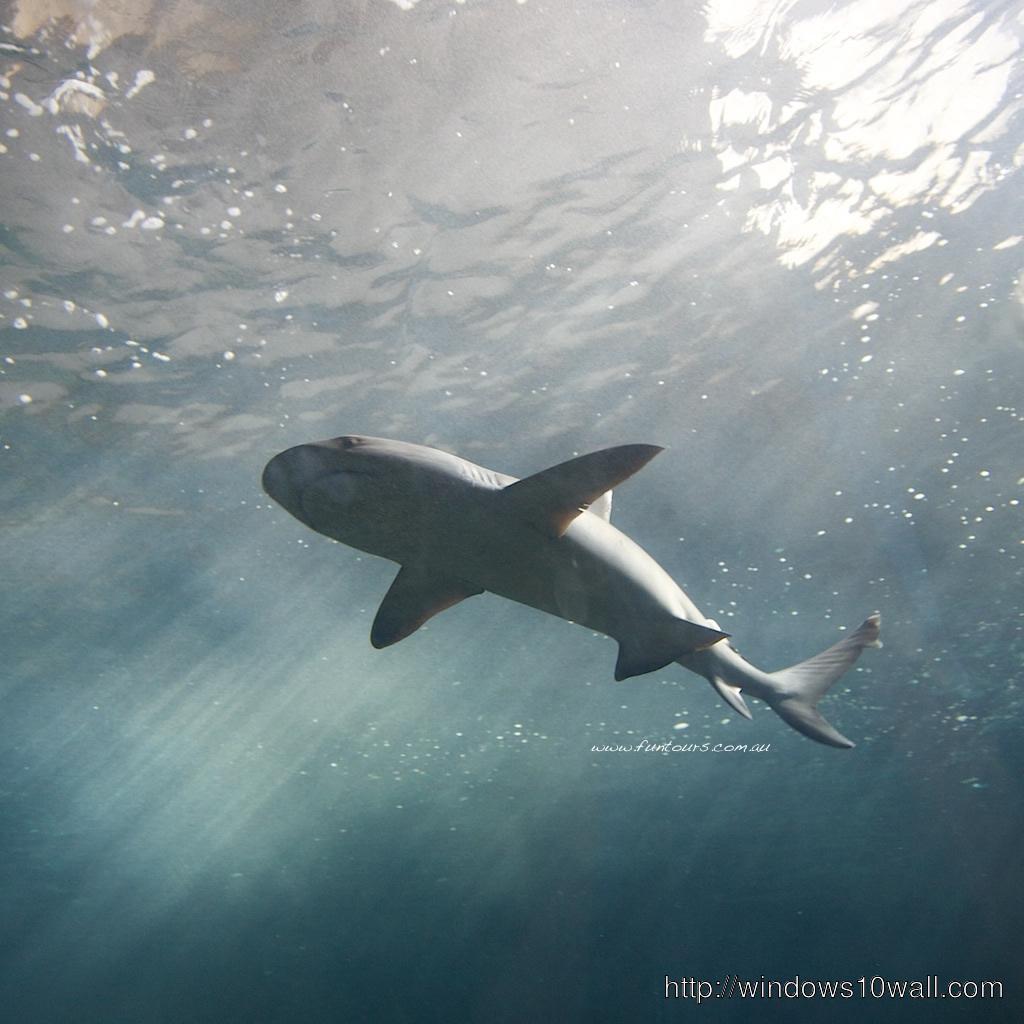 Underwater Shark iPad Background Wallpaper